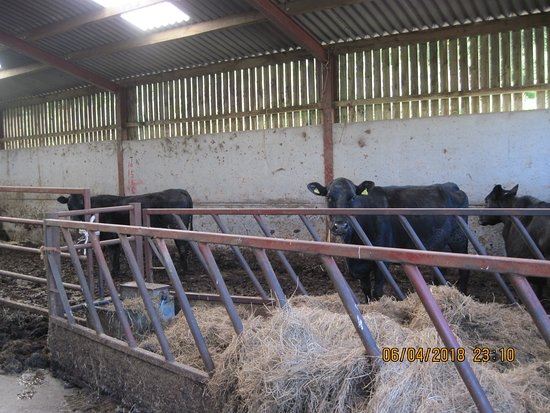 Newlands Valley, UK: It is a working farm/ranch