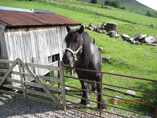 Newlands Valley, UK: Blossom the horse loves apples