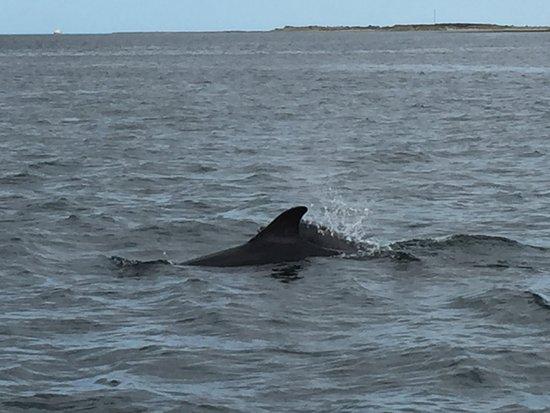 Dolphin Trips Avoch张图片