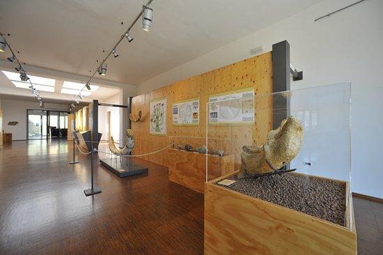 Museo Geopaleontologico