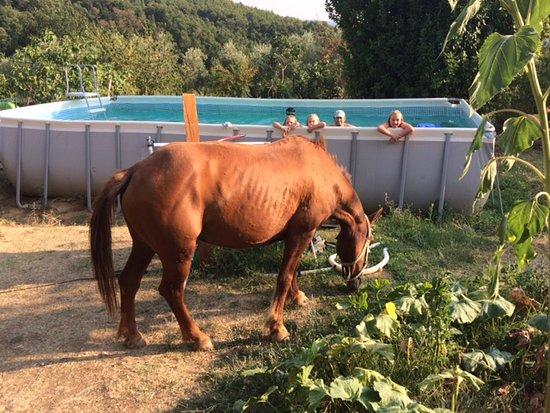 Pescosolido, Italien: Family Horse