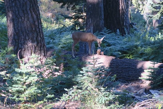 Dorst Campground: Doe in Muir grove