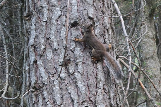 Dorst Campground: Chattering squirrel, very annoyed at me