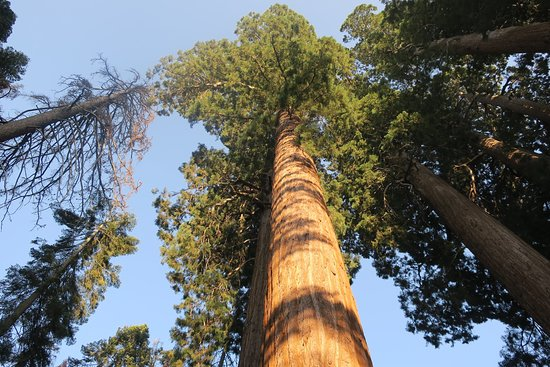 Dorst Campground: Muir grove sequoia, 2 mile hike from Dorst creek campground