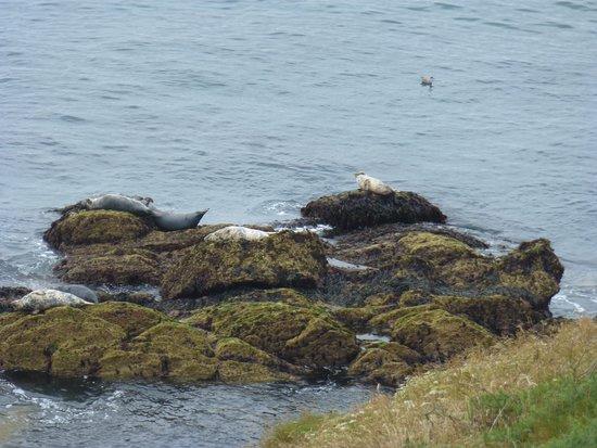 Caldey Island: Seals near the lighthouse