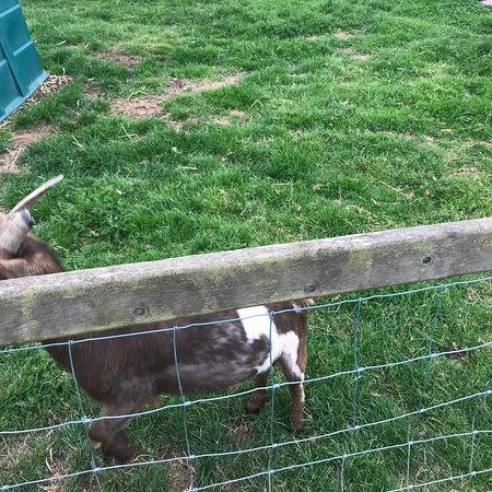 Newgrange Farm 사진