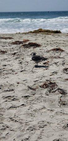 Silver Strand State Beach: 20180901_132050_large.jpg
