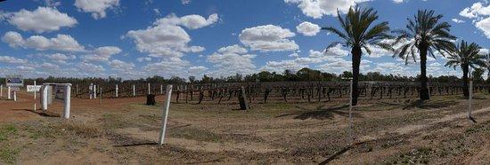 Riversands Winery: The Riversand Winery