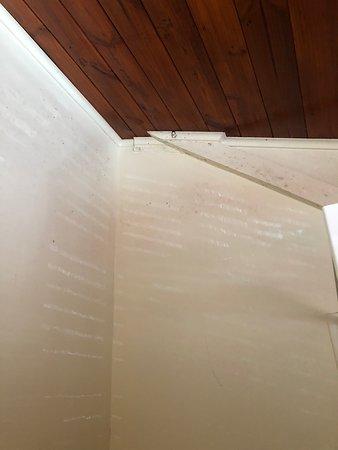 St. Albans, Αυστραλία: Mouldy bathroom