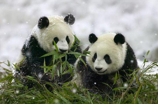 5 Tage Chengdu Leshan Mt Emei und...