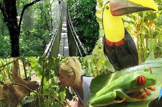 Tenorio Rain Forest Hanging Bridges...