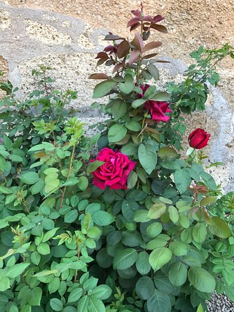 Fasnia, Ισπανία: Rosales