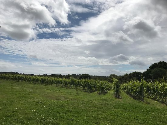 Hellingly, UK: We have 3 Hectares of vines all red varieties