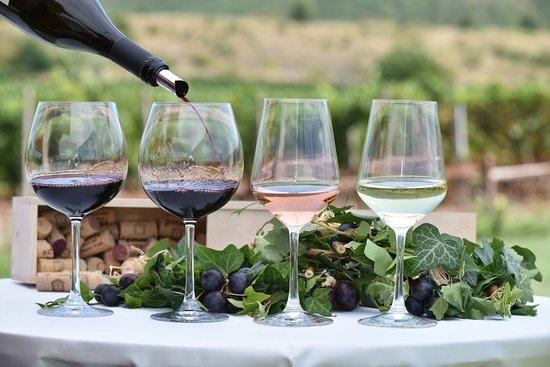 Skopje, República de Macedonia: It's Wine Time!