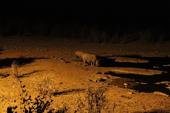 Etosha Pan: Moringa water hole at Halali, which is being lit throughout the night. A wonderful experience.