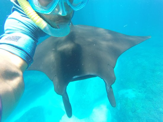 The King of The Sea Trip: selfie with manta