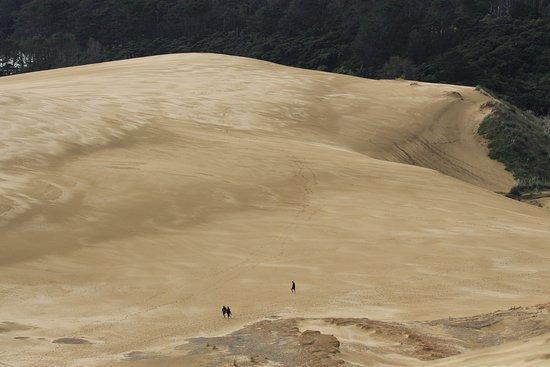Pukenui, New Zealand: Dune