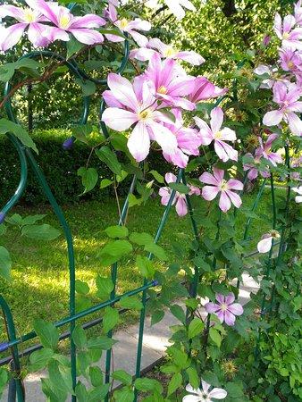 Дендропарк: Цветы в парке