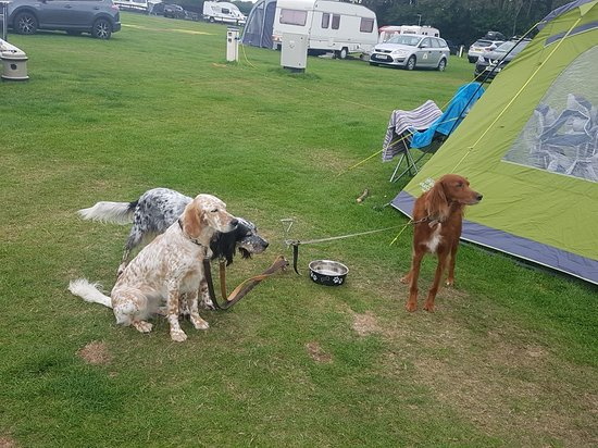 Dunstan Hill Camping and Caravanning Club Site: 20180901_105329_large.jpg