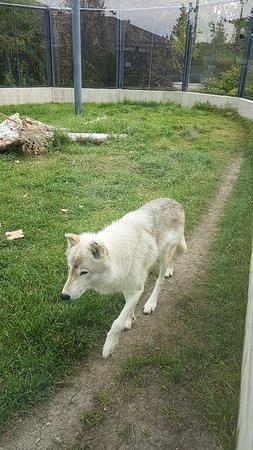 Saskatoon Forestry Farm Park & Zoo: 20180903_102225_large.jpg