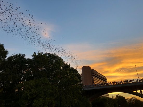 Capital Cruises: This shows one of the lines of flying bats that went over our heads.