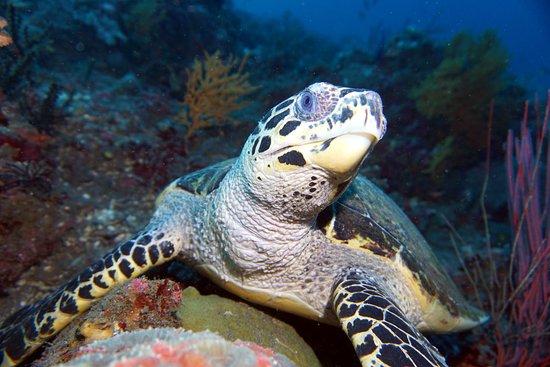 Ocean Sun Dive Center