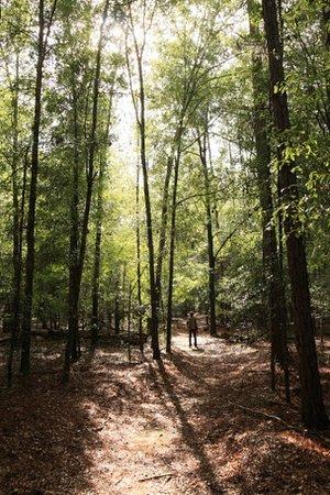 Magnolia Springs Park: Hike in the rain.