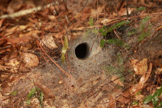 Magnolia Springs Park: Spider web!
