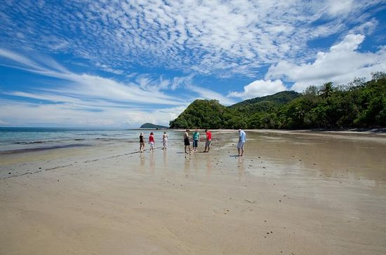 Daintree og Cape Tribulation Tour fra...