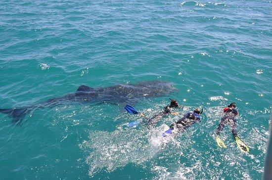 Reise zum Meer von Cortez und Walhaien