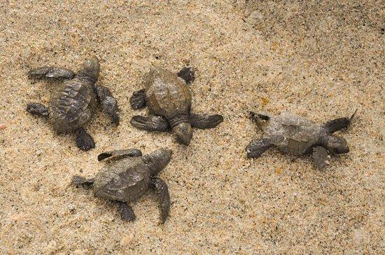 Schnorchel und Meeresschildkröte...