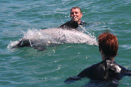 Akaroa Dolphin Swimming & Alpaca...