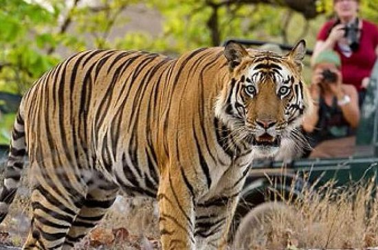 Historical Jaipur and Wildlife of