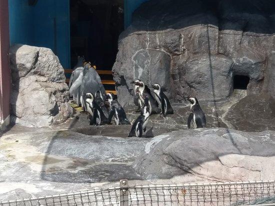 Noboribetsu Marine Park Nixe : 企鵝餵食活動