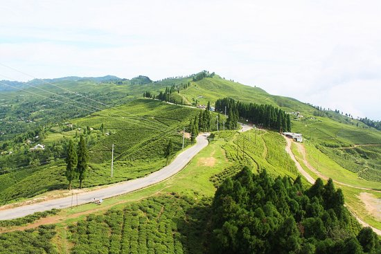 A splendid view of a tea estate in Kanyam of Ilam district, Nepal.