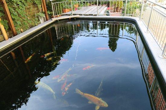 Rudersdorf, Jerman: Fischteich im Garten
