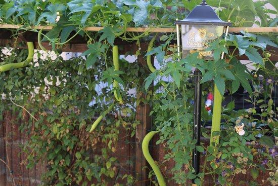 Rudersdorf, Jerman: asiatisches Gemüse im Garten