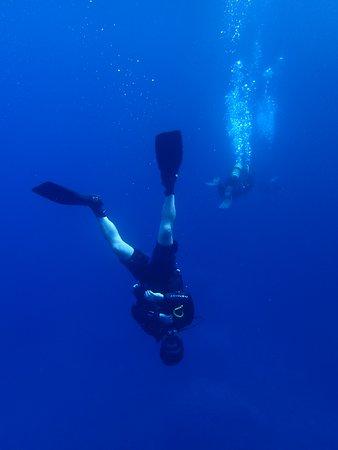 Bubbles Dive Centre: A different perspective