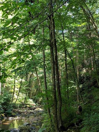 Coeburn, VA: Little Stony Gorge