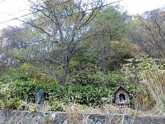 Kuriyama-cho, Nhật Bản: 2代目の木