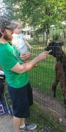 Wisconsin Deer Park: My husband and son feeding the animals