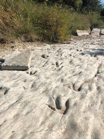 Dino tracks! - Picture of Dinosaur Valley State Park, Glen ...