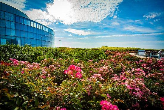 Ocean Casino Resort, hôtels à Long Beach Island