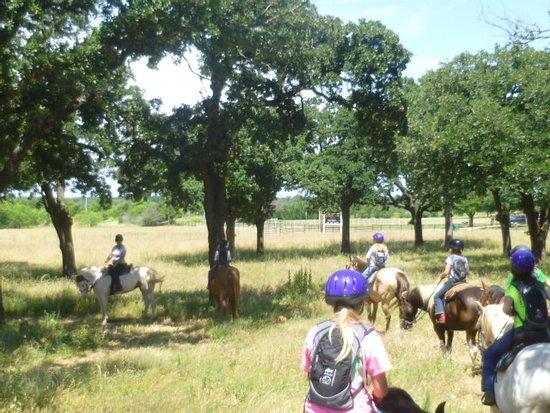 Black Mustang Ranch
