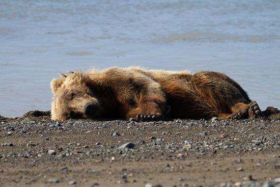 Lake Clark NP and Sleepy Bear - Picture of Smokey Bay Air