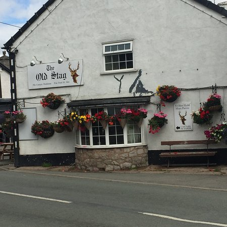 The Old Stag