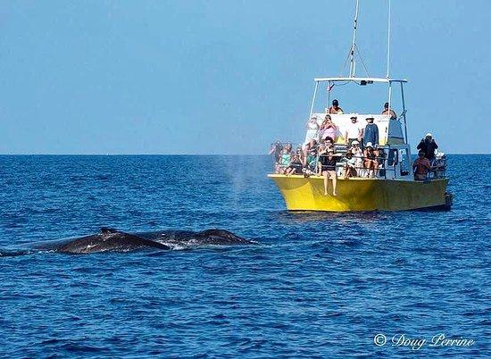 Torpedo Tours: Whale whale whale...