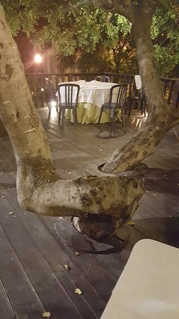 Belvedere Spinello, Italie : il soppalco sul salice gigantesco