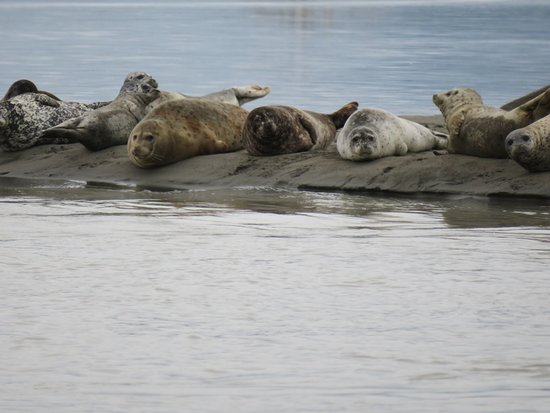 A few of the seals catching a few rays!