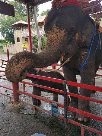ตลาดน้ำหมู่บ้านปางช้างอโยธยา: 20180904_115819_large.jpg